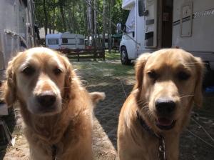 Two hot doggies